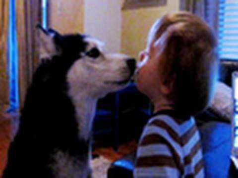 Cutest Mishka Video Ever – Talking Husky Dog