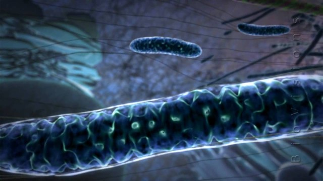 Powering the Cell: Mitochondria