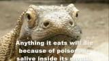 Top 10 Animals You Didn't Know Were Venomous/Poisonous!