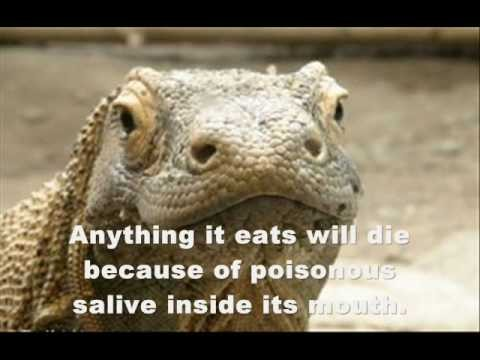 Top 10 Animals You Didn't Know Were Venomous/Poisonous!
