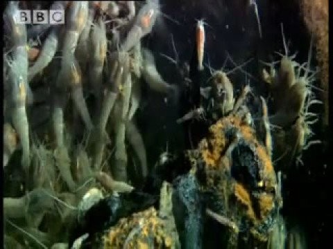 Witnessing the birth of life on Earth? – The Abyss – BBC wildlife