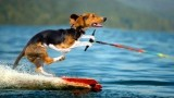 Top 11 Animals Playing Sports Better than Most Humans