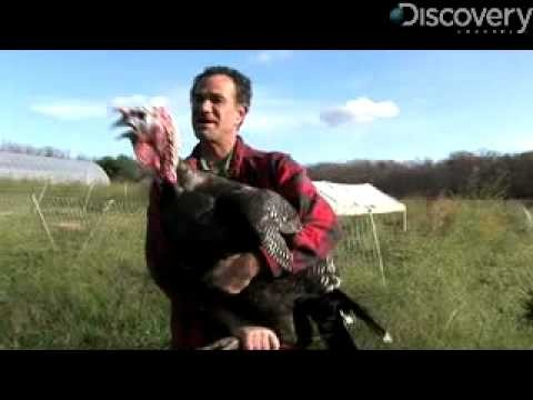 Top 5 Facts You Probably Don't Know About Turkeys